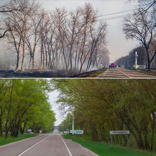 Зону отчуждения в Чернобыле октроют для посетителей с 1 июня 2020